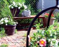 From My Garden 2012